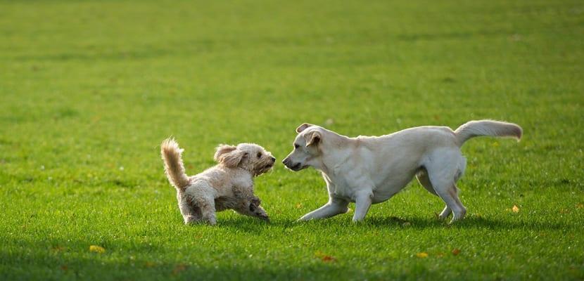 Tener dos o más perros
