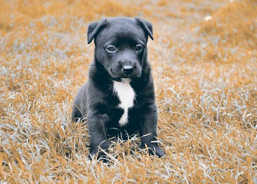 por-que-se-hace-sus-necesidades-mi-perro-en-casa-3