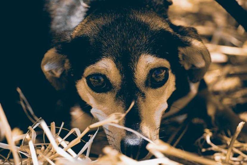 por-que-se-hace-sus-necesidades-mi-perro-en-casa-4