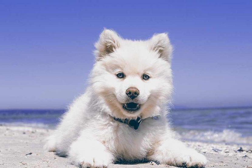 por-que-se-hace-sus-necesidades-mi-perro-en-casa-6