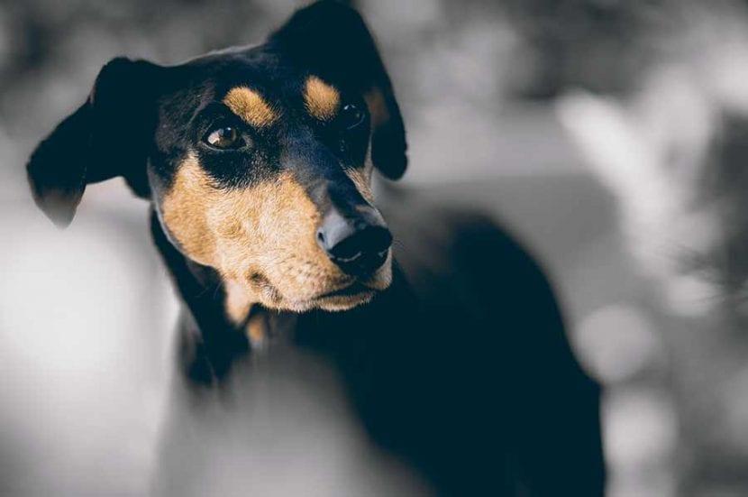 por-que-se-hace-sus-necesidades-mi-perro-en-casa-7
