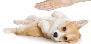 Perro recibiendo un masaje.