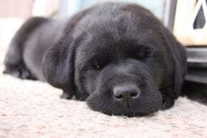Cachorro durmiendo