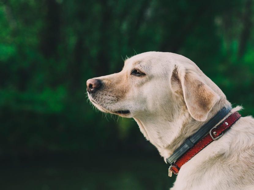 Perro con collar