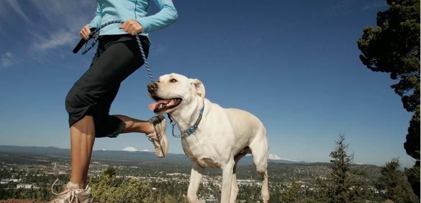 Deportes con el perro