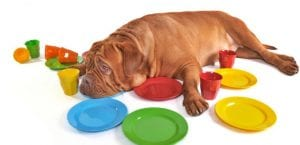 Indigestiones en el perro