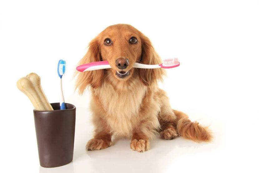 Limpiar dientes a un perro