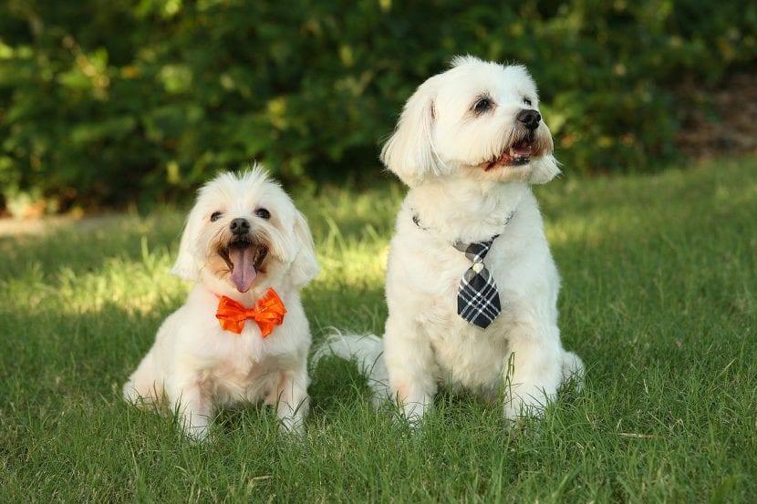pareja-de-perros