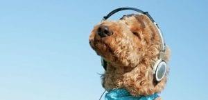 Perro escuchando música con unos cascos.