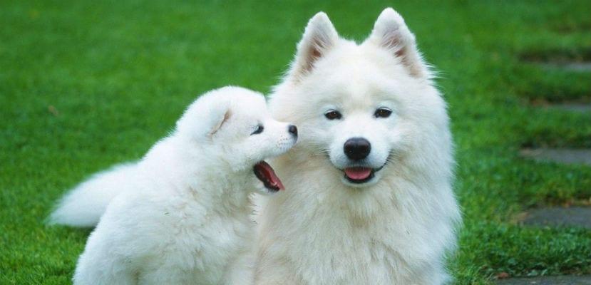 Dos perros en el campo.