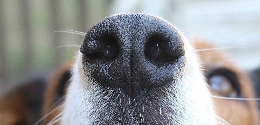 Primer plano del hocico de un perro.
