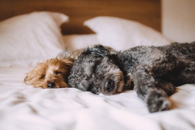 Perros durmiendo de lado