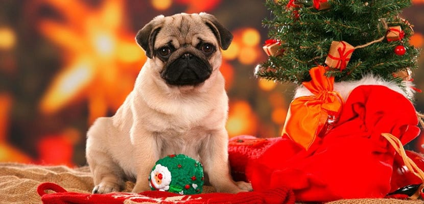 Navidad con perros