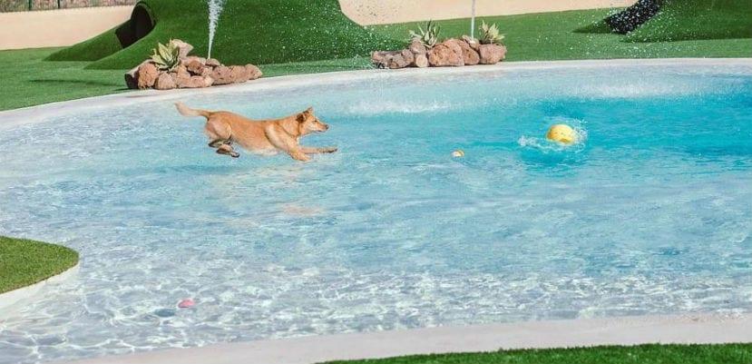 Perros bañándose en la piscina del Mascots Resort.