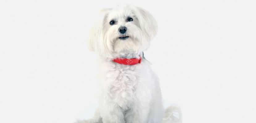 Resultado de imagen para collar inteligente para perros Kyon Pet Tracker