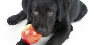 Frutas para el perro