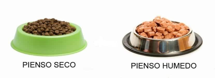 comida humeda o seca para perro