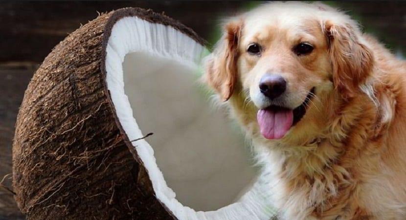 beneficios aceite de coco para perros