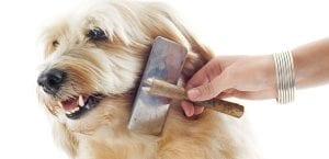 Persona cepillando el pelo de un perro.