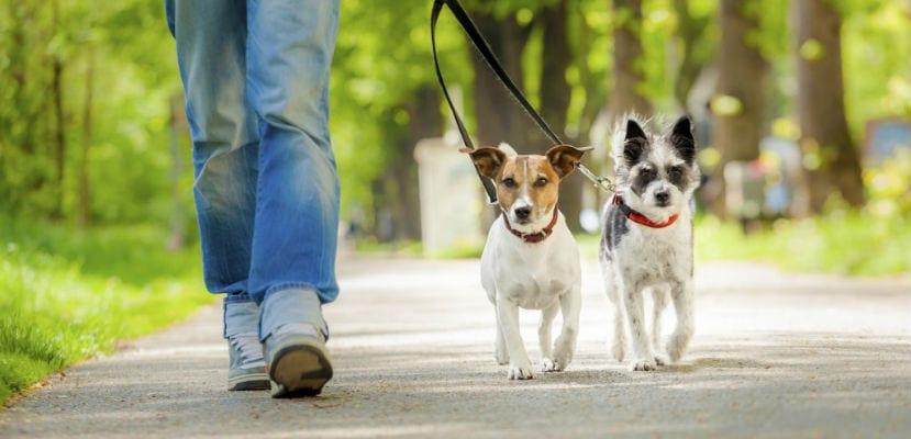Hombre paseando a dos perros.