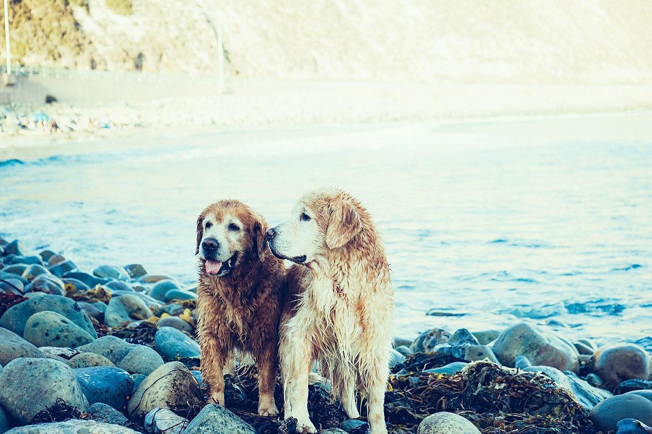 Tu perro puede tener una ETS, cuídalo