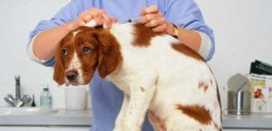 Veterinario poniéndole una inyección a un perro.