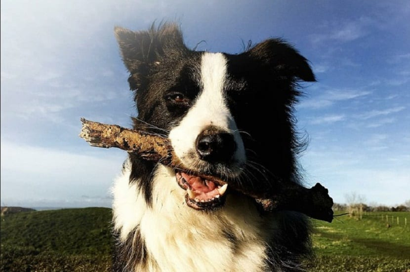 los perros adoran jugar