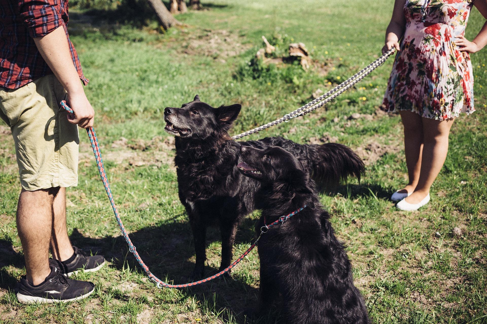 Las enfermedades de transmisión sexual son comunes en perros