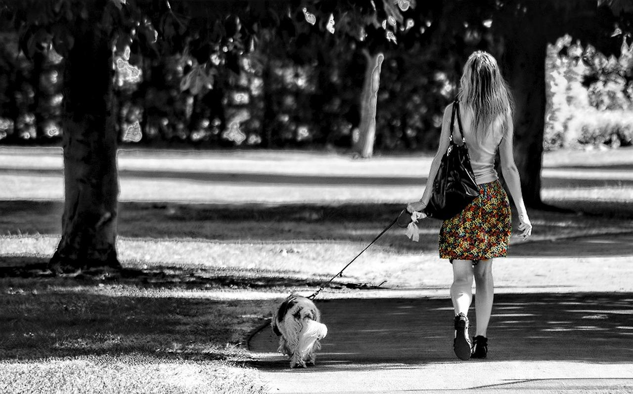 Pasea a tu perro varias veces al día