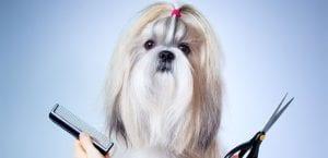 Cuidar el pelo del perro