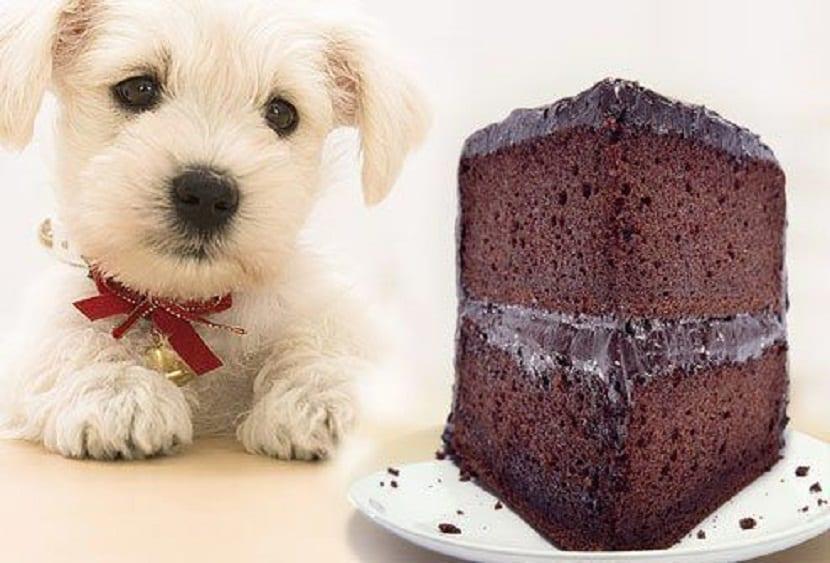 el dulce es toxico en perros