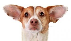 otitis o infeccion de oido