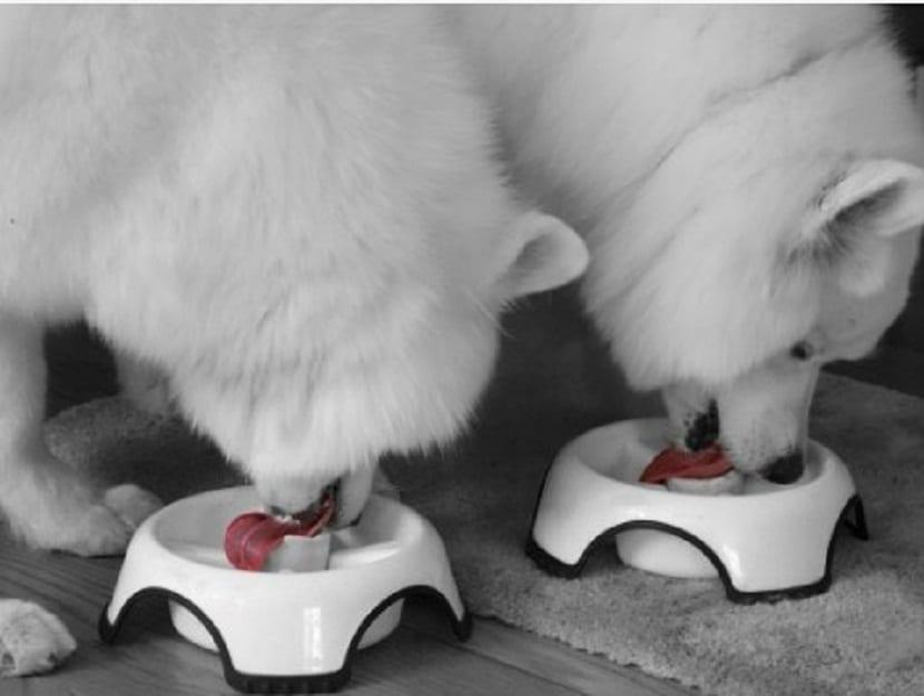 alimentacion correcta de nuestro perro