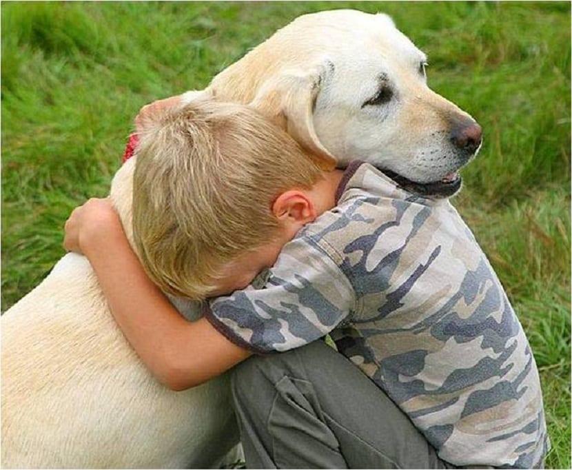perro y nino abrazados
