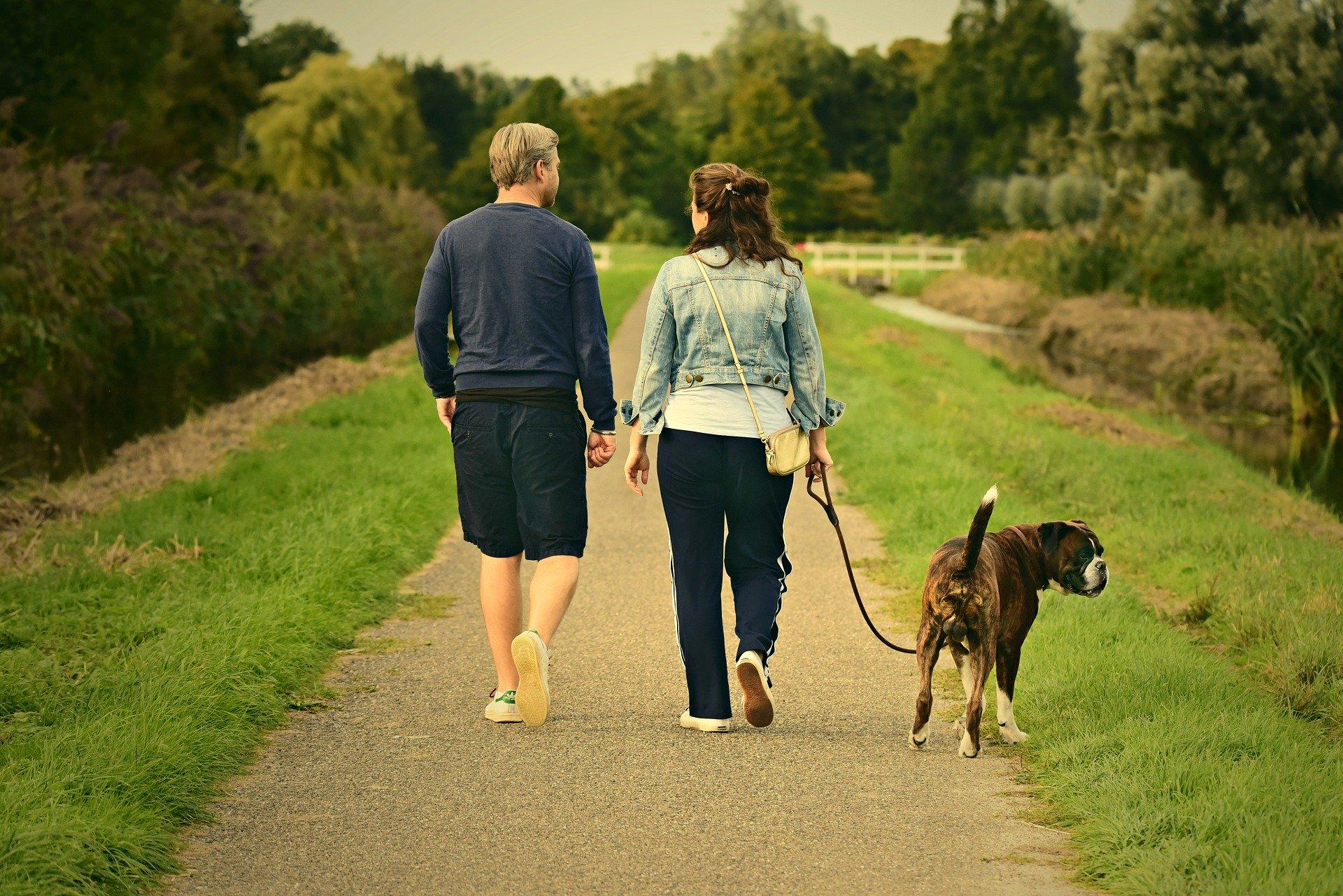 Saca a tu perro de paseo varias veces al día