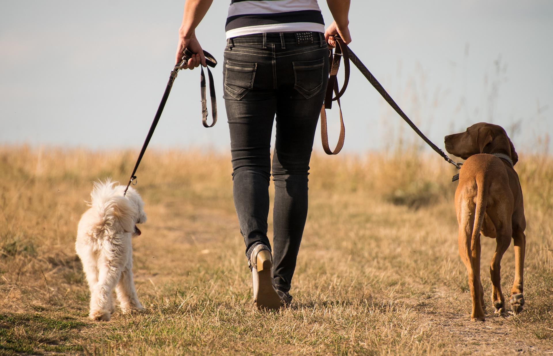 Perros haciendo deporte con su humano