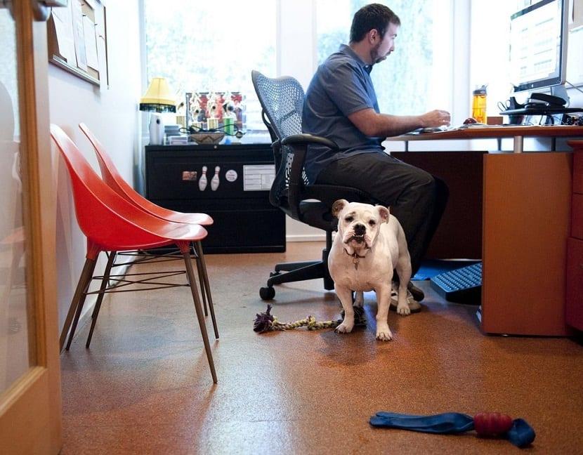 beneficios de los perros, llevar perros trabajo, oficinas dog friendl