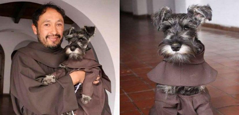 Fray Bigotón, un Schnauzer adoptado por los monjes del convento de San Francisco de Cochamba (Bolivia).