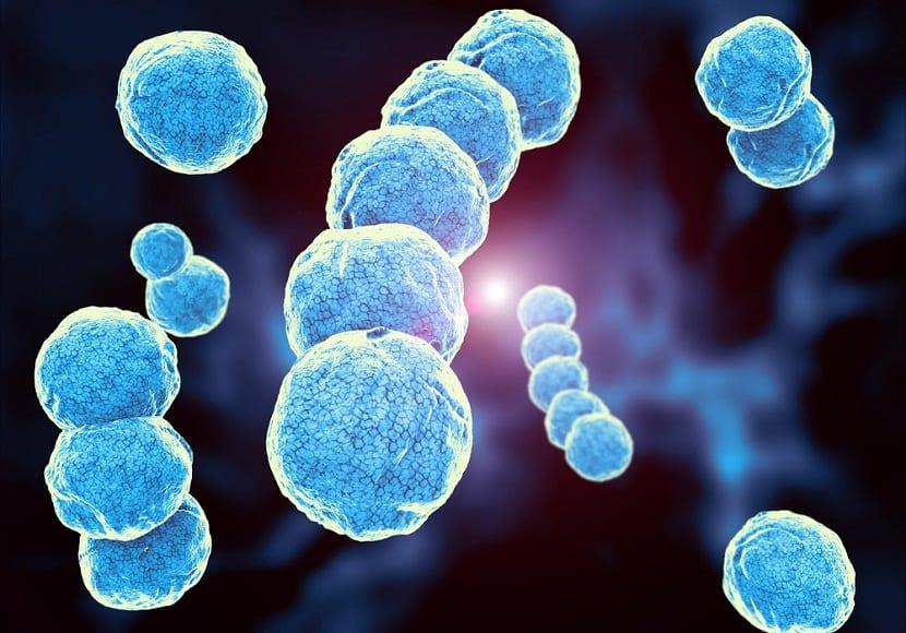 bacterias que pueden causar la muerte