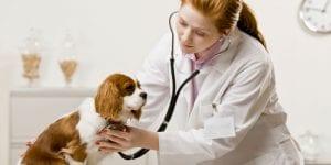 Veterinaria examinando a un perro.