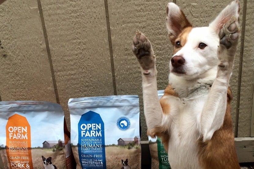 Alergia alimentaría en perros