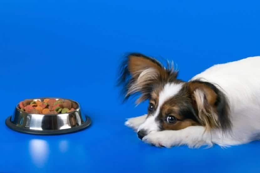 Alérgenos habituales en los alimentos para mascotas