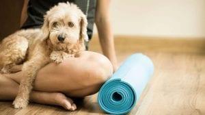 doga y yoga