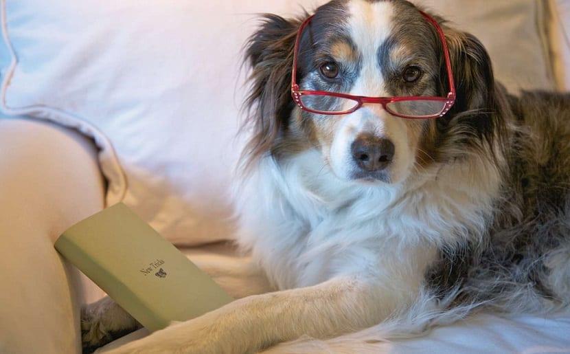 artrosis en perros ya adultos