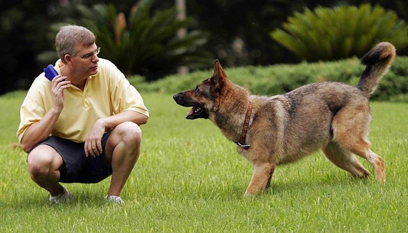 porque tienes que educar a tu perro