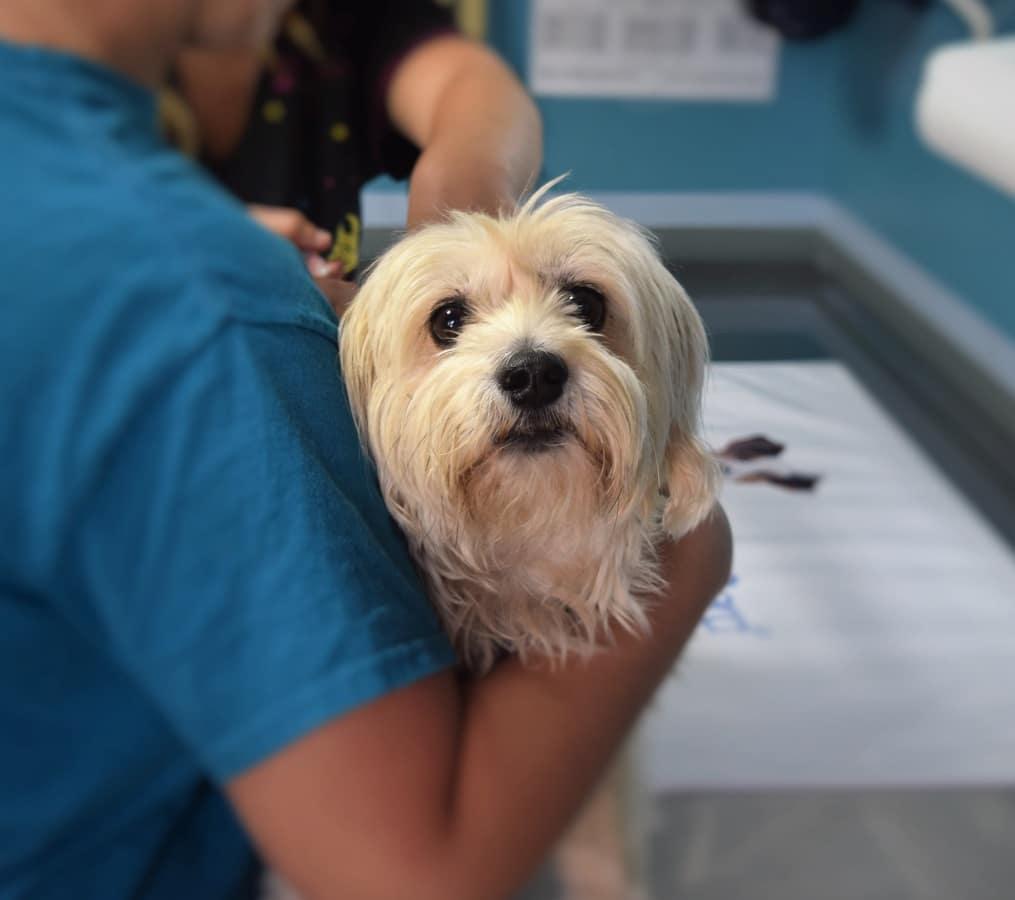 Si tu perro tiene sarna, debes de llevarlo al veterinario