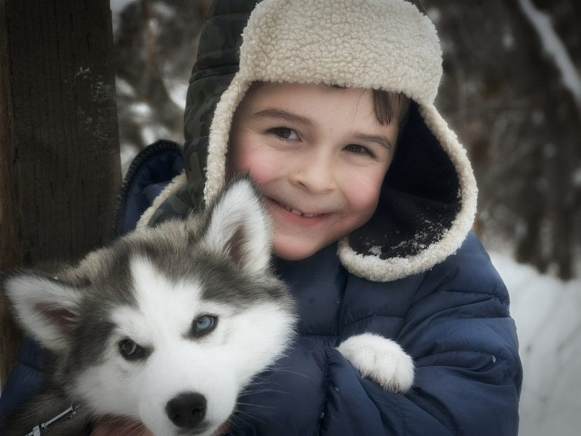 Niño con cachorro de Husky Siberiano