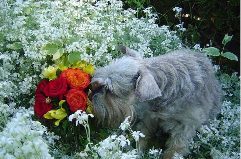 haz que tu perro no entre al jardin