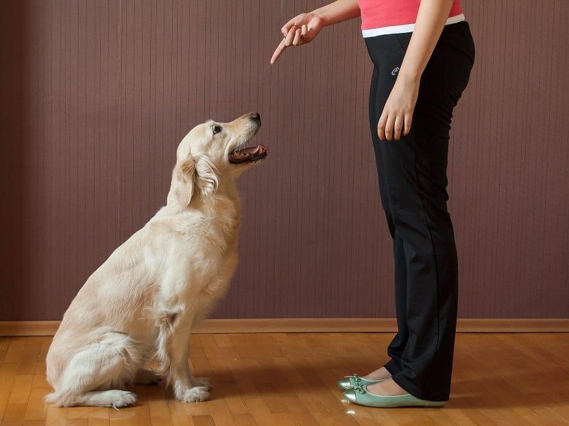 educar a un perro es tu responsabilidad