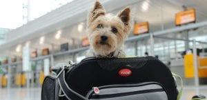 Viajar en avión con el perro